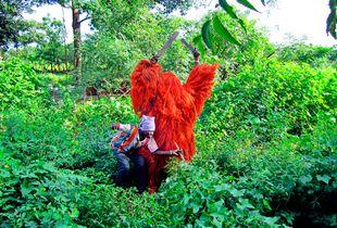 Elevé en 2005 par L'UNESCO, au rang de «patrimoine culturel immatériel de l'humanité», le kankourang est un personnage mystique recouvert des fibres extraites d'écorces d'arbre rouge (écorces de djafs).