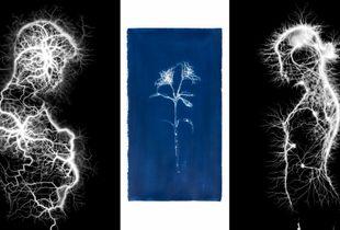 Lilium inter scintillis . Portrait of Mar and Dani. (Triptych)