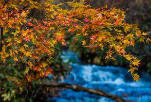 Orange and blue , Rarumanai river valley,Hokkaido,Japan,late autumn