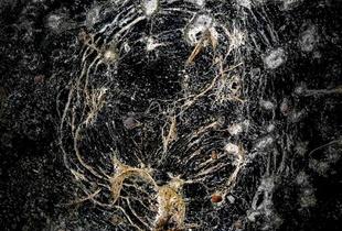 Concrete universe 1