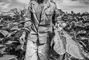 Tobacco Farmer.  Valle de Silencio, Cuba.  01.19.16