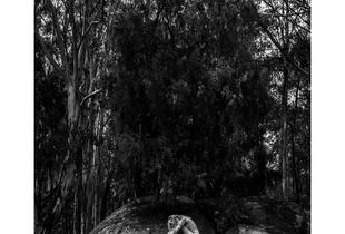 Human Nature- Namadgi - Australia #1