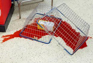 Supermarket Spill