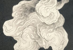Chinese Cloud Form