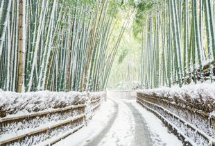Snow-covered bamboo forest 10