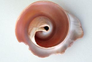 nautilus inside