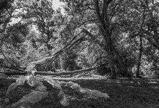 Spherical Amalgamation - Fallen Tree