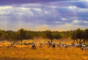 Yarlbrinda Sun Rays, South Australia