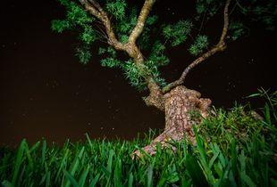 Alien Snail Tree Heads Home
