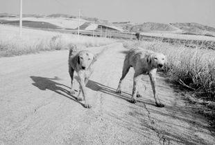 Cani i mannara