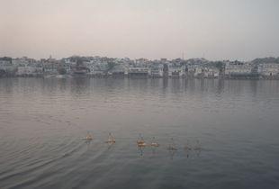 The Lake I, Pushkar 2016