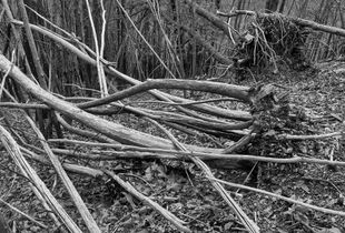 wounded woods 06