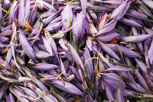 Saffron production fits well into the Slow Food movement and local initiatives for the promotion of agricultural biodiversity.