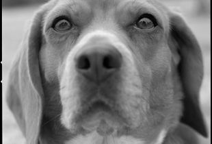 10G # beagle # SuGS