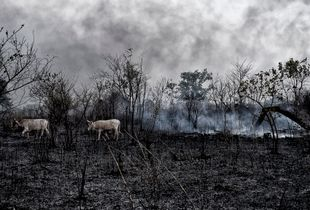 Africa Forest fires