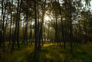 Forest feeling.