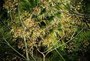 Jungles 06 © Olivia Lavergne