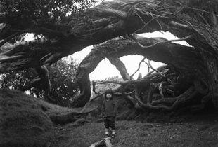 Hannah and The Tree