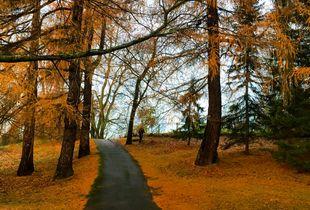 autumn morning in helsinki