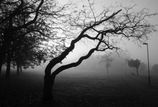 Tree in the fog Sunny Hill Park Park