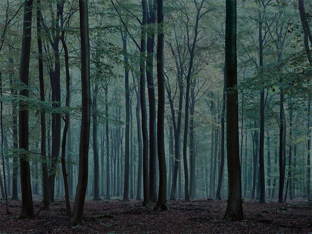 wald landscapes of memory photographs and text bymichael lange