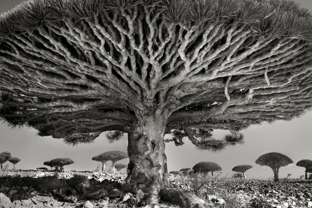 Heart of the Dragon © Beth Moon
