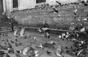 A boy chases pigeons, causing them to fly into the air, in front of Yeni Cami (New Mosque).