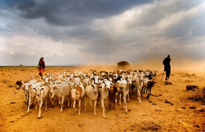 © Johan Ensing (Netherlands) Masaai shepherds with their goats on the dry plains of Amboseli. Honorable Mention, LensCulture Exposure Awards 2009