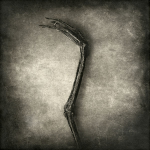 heron leg© Gary
