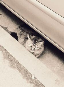 Stray Cat 3