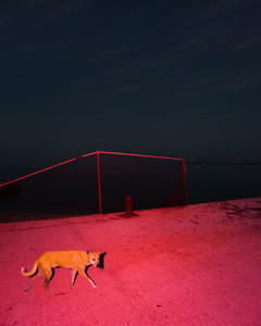 A Starving feral dog on the catwalk, cuidad del carmen , veracruz, Mexico, 2016