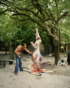 UNRECOGNIZED REPUBLIC OF NAGORNO-KARABAKH / Mardakert / 13.09.2011. Slaughtering of a cow in the courtyard of a house.