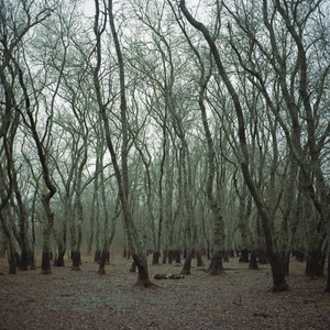 Letea forest in the winter