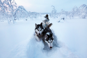 Kings of lapland