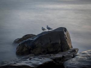 Shelley Beach   © Ross Duncan