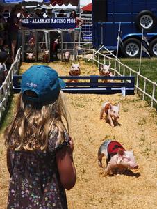 All Alaskian Pig Race © Dianne Yudelson