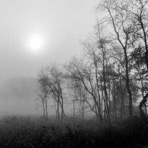 Forest Fog 8