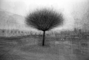 stadtbaum#5