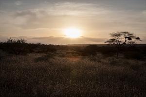 Solar Conservation