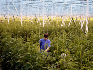 10.000 m2,  Agrocare, Wieringermeer