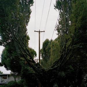 Trees on a residential street in Vancouver, British Columbia