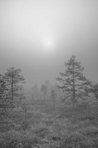 Soomaa - land of bogs XI