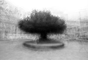 stadtbaum#10