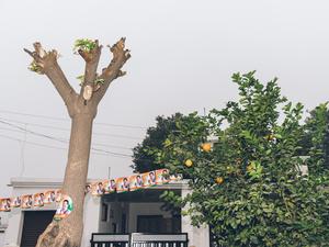 Election season. Jammu, JK, 2014.