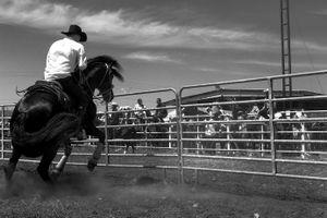 Azabache(black horse)