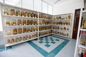 "A ""reference room"" filled with jars of deformed, stillborn fetuses is viewable for people visiting the hospital."