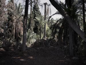 El Batroun, 17th September 2011, 09:58