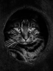 Cat on the Cat Boat
