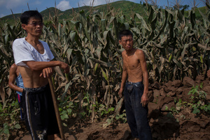 Men stand in a cornfield in Songchon County, North Korea, 13 August 2012.