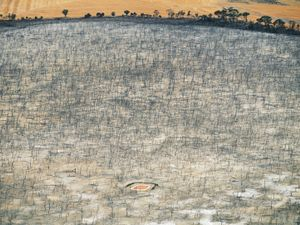 "Saltwater affected dam, Wagin, Western Australia, Australia. Rising saltwater table from surrounding wheat farms killed the forest and freshwater dam, from the series ""Abstract Earth"" © Richard Woldendorp"